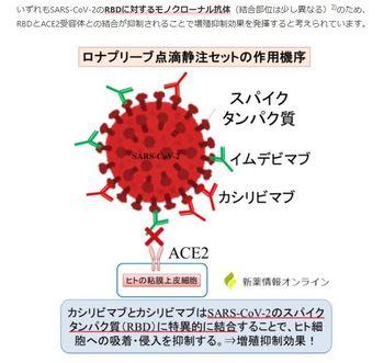 抗体カクテル療法の効果イメージ.JPG